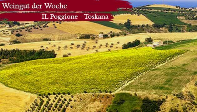 Weingut der Woche - IL Poggione