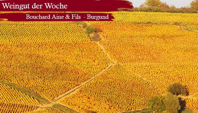 Weingut der Woche Bouchard Aine et Fils aus Burgund Frankreich